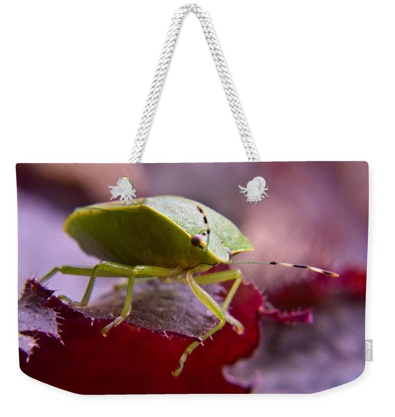 Purple Weekender Tote Bag featuring the photograph Purple Eyed Green Stink Bug by Douglas Barnett