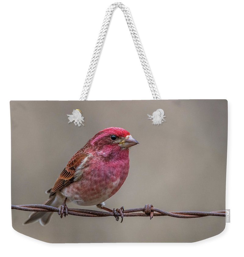 Purple Weekender Tote Bag featuring the photograph Purple Finch On Barbwire by Paul Freidlund