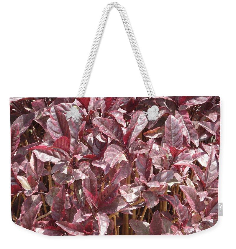 Purple Weekender Tote Bag featuring the photograph Purple Foliage by Usha Shantharam