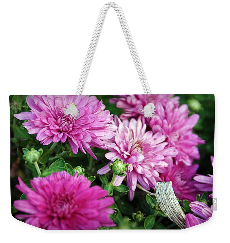 Flowers Weekender Tote Bag featuring the photograph Purple Mums by Cricket Hackmann