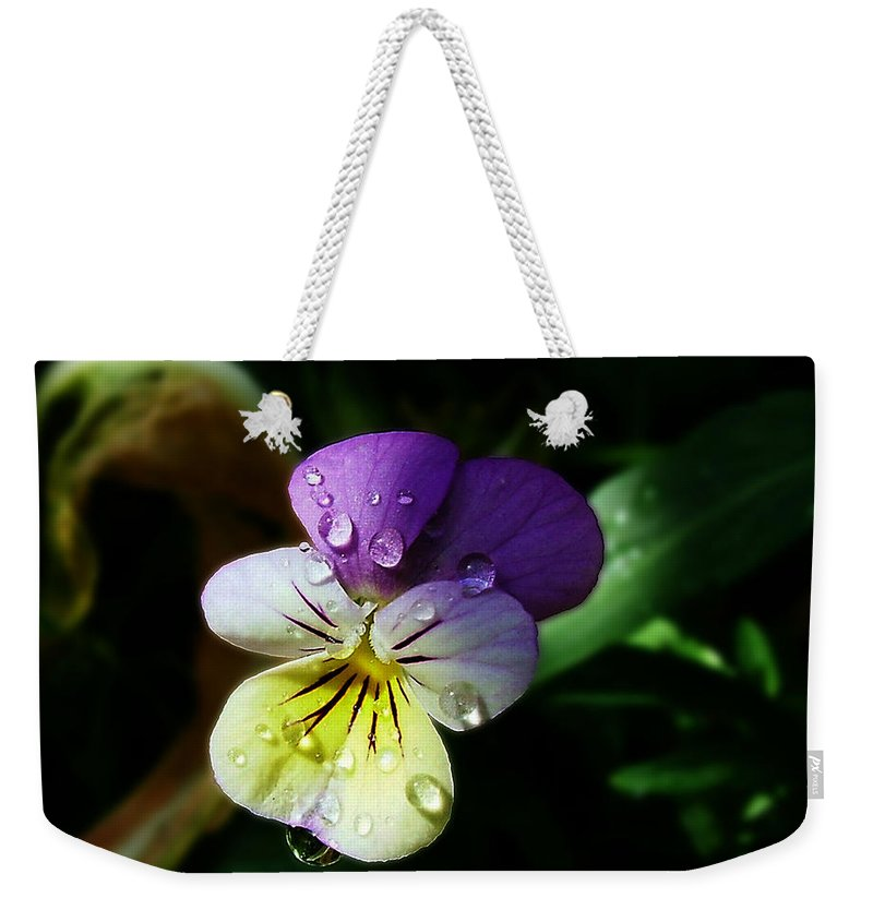 Flower Weekender Tote Bag featuring the photograph Purple Pansy by Anthony Jones