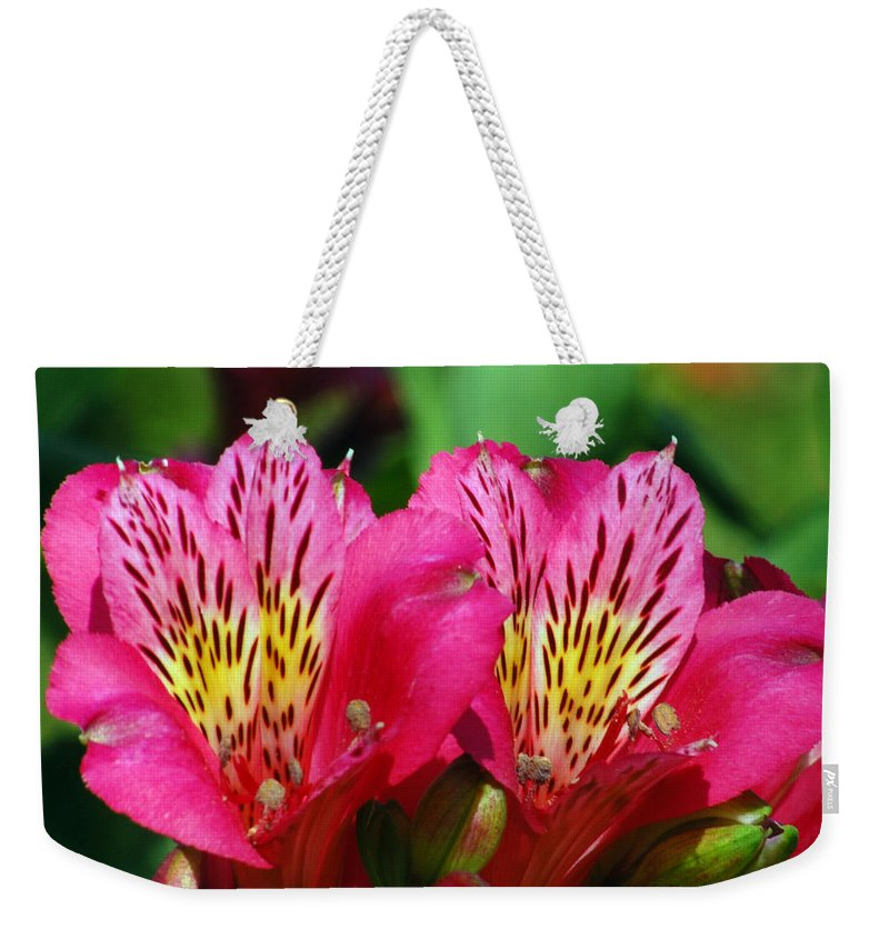 Peruvian Weekender Tote Bag featuring the photograph Purple Peruvian Lily by Amy Fose