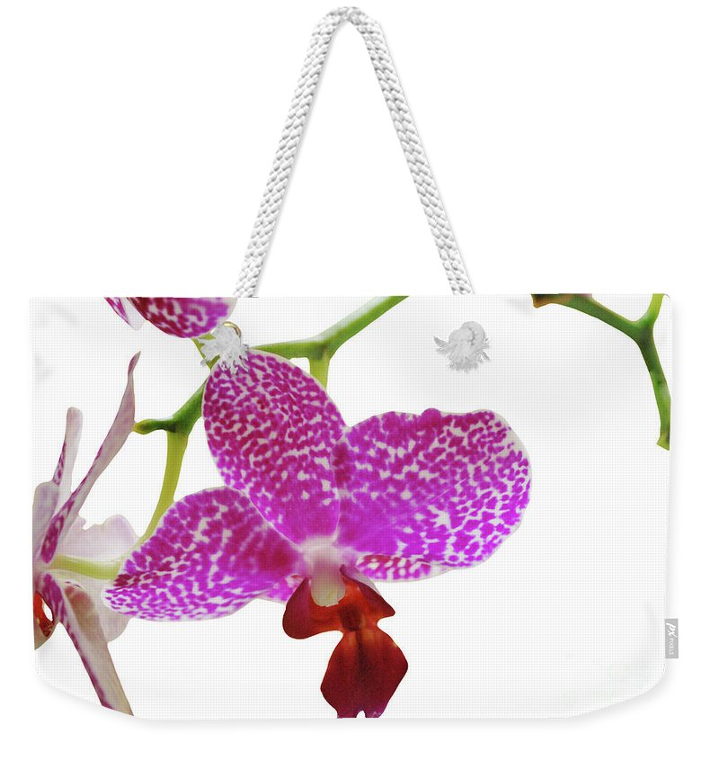 Phalaenopsis Weekender Tote Bag featuring the photograph Purple Spotted Orchid On White by Heather Kirk