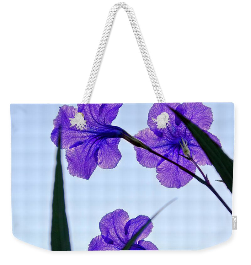 Flower Weekender Tote Bag featuring the photograph Purple Trio by Christopher Holmes