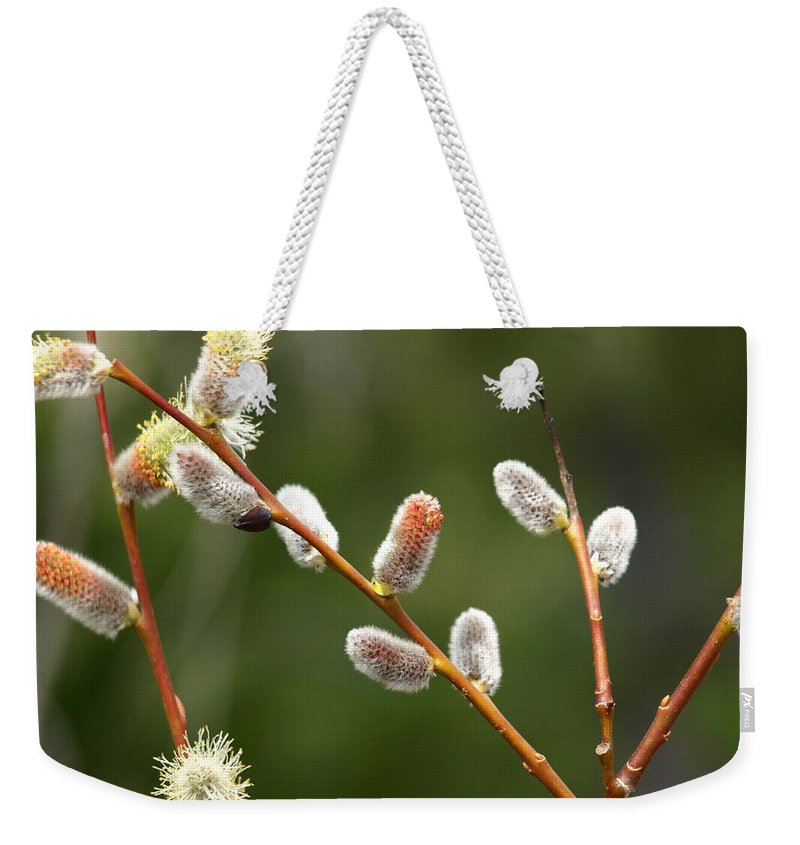 Willows Weekender Tote Bag featuring the photograph Pussy Willows In Spring by DeeLon Merritt