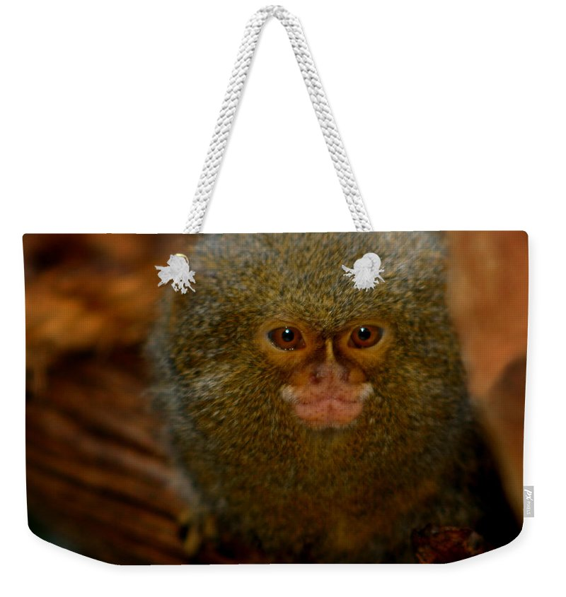 Pygmy Marmoset Weekender Tote Bag featuring the photograph Pygmy Marmoset by Anthony Jones