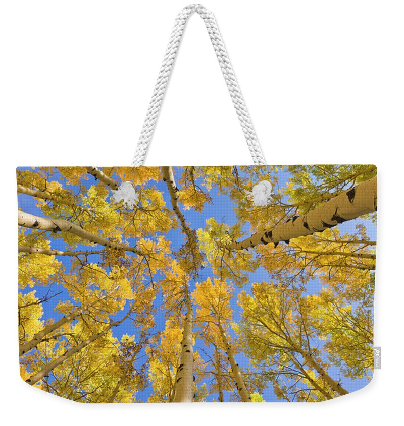 00559133 Weekender Tote Bag featuring the photograph Quaking Aspens Overhead by Yva Momatiuk John Eastcott