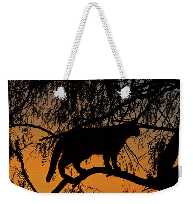 Cats Weekender Tote Bag featuring the photograph Queen Of The Tree by Brandy Stinchcomb