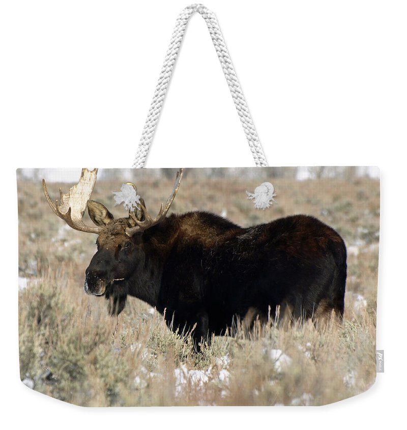 Moose Weekender Tote Bag featuring the photograph Quiet Power by DeeLon Merritt