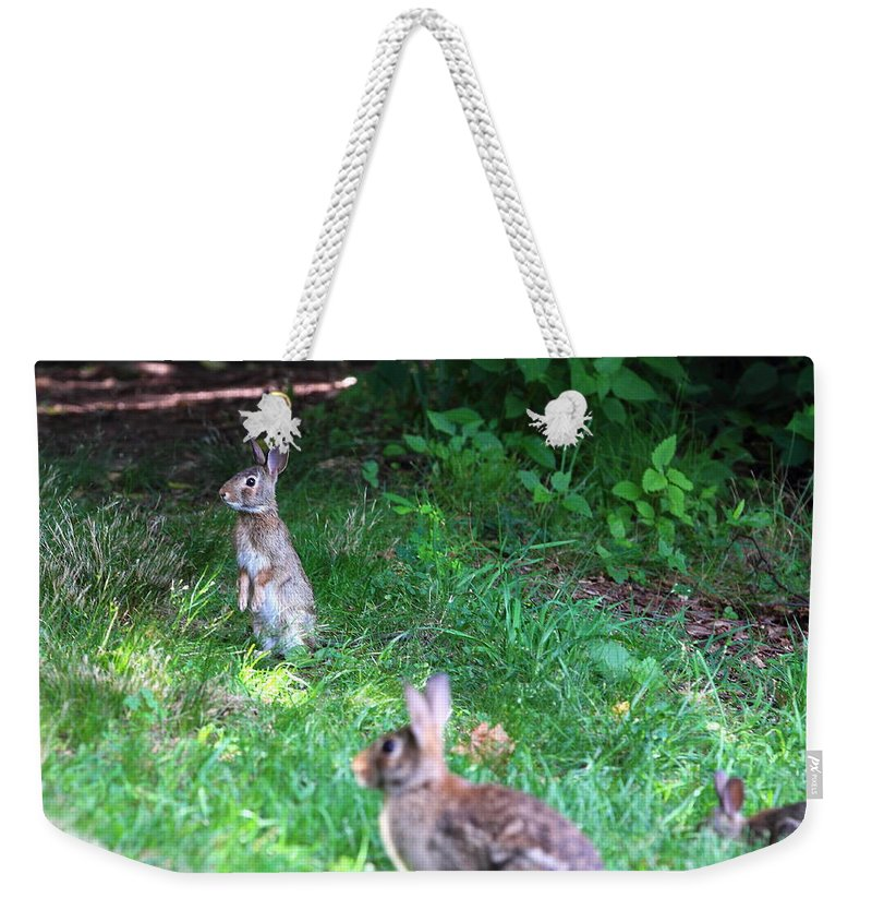 Wild Weekender Tote Bag featuring the photograph Bunny Love by Brian Manfra