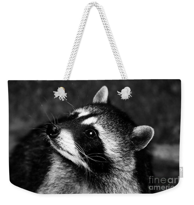 Raccoon Weekender Tote Bag featuring the photograph Raccoon Looking by David Lee Thompson