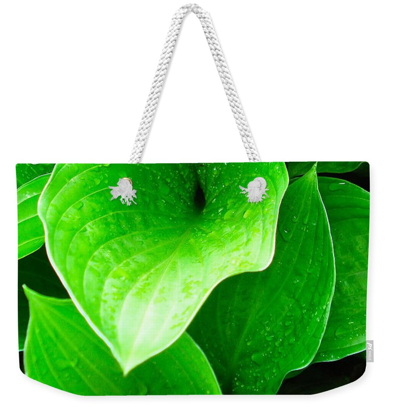 Flowers Weekender Tote Bag featuring the photograph Rain Kissed 2 by Nelson F Martinez
