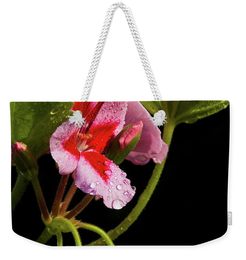 Rain Weekender Tote Bag featuring the photograph Rain Refreshed by Christopher Holmes