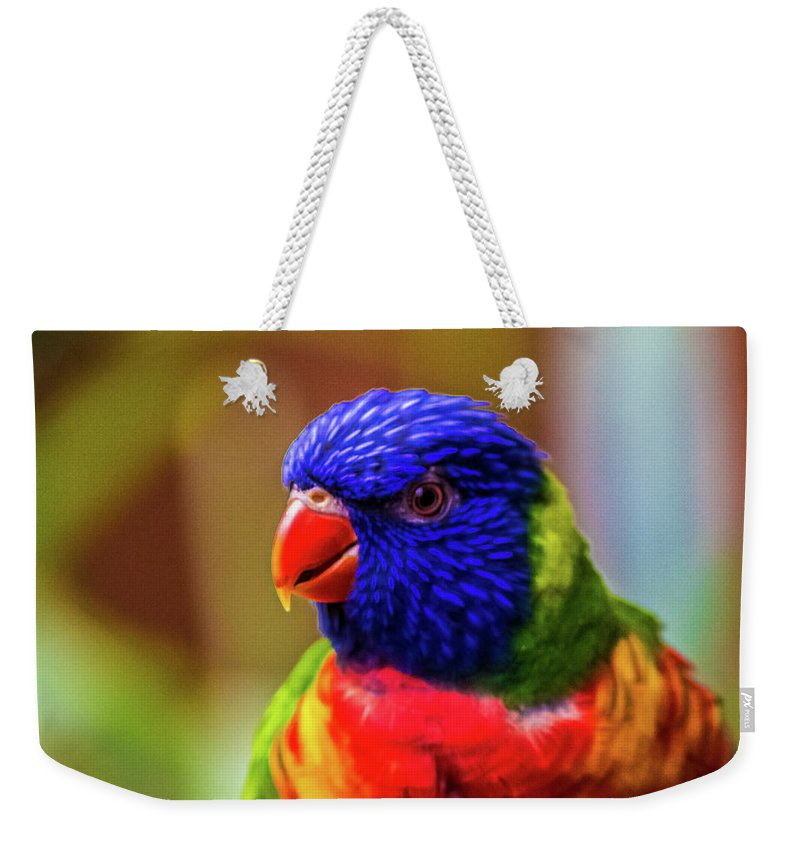 Rainbow Lorikeet Weekender Tote Bag featuring the photograph Rainbow Lorikeet by Martin Newman