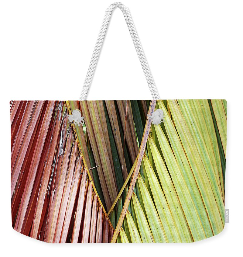 Florida Weekender Tote Bag featuring the photograph Rainbow Of Palms Gp by Chris Andruskiewicz