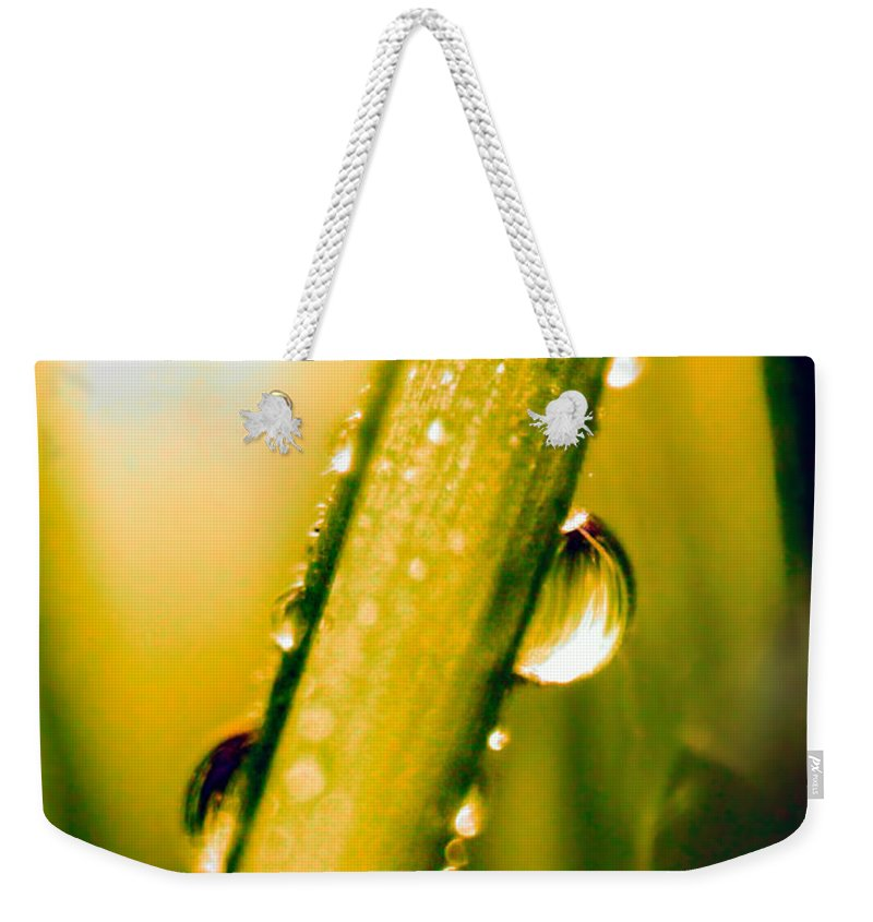 Raindrops On A Blade Of Grass Weekender Tote Bag featuring the photograph Raindrops On A Blade Of Grass by Mariola Bitner
