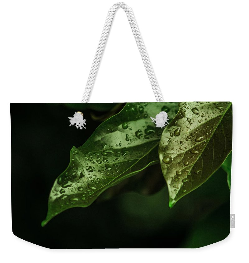 Raindrops Weekender Tote Bag featuring the photograph Raindrops On Avocado Leafs by Totto Ponce
