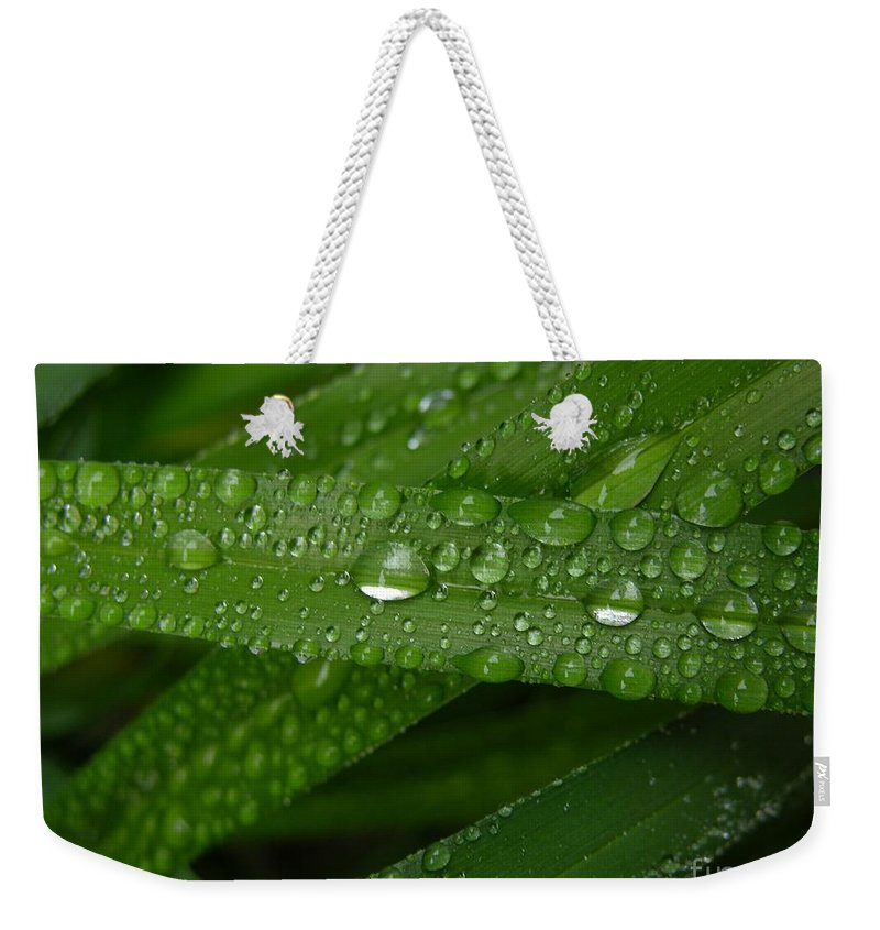 Rain Weekender Tote Bag featuring the photograph Raindrops On Green Leaves by Carol Groenen