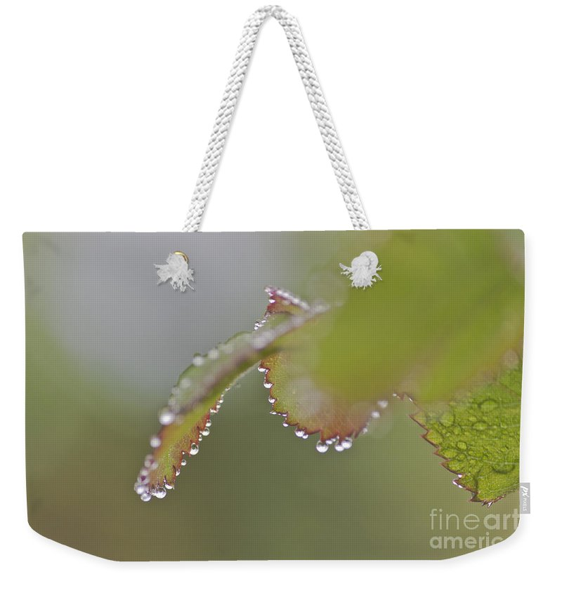 Freshness Weekender Tote Bag featuring the photograph Raindrops On Roses by Terri Waters