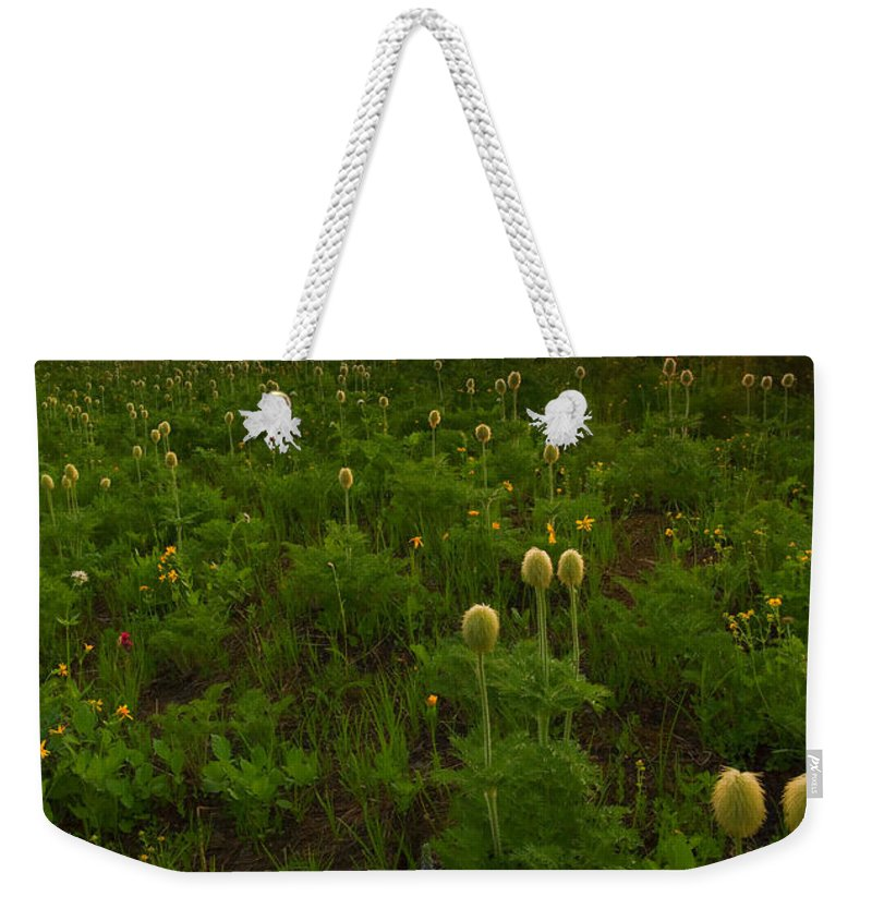 Meadow Weekender Tote Bag featuring the photograph Rainier Wildflower Light by Mike Dawson
