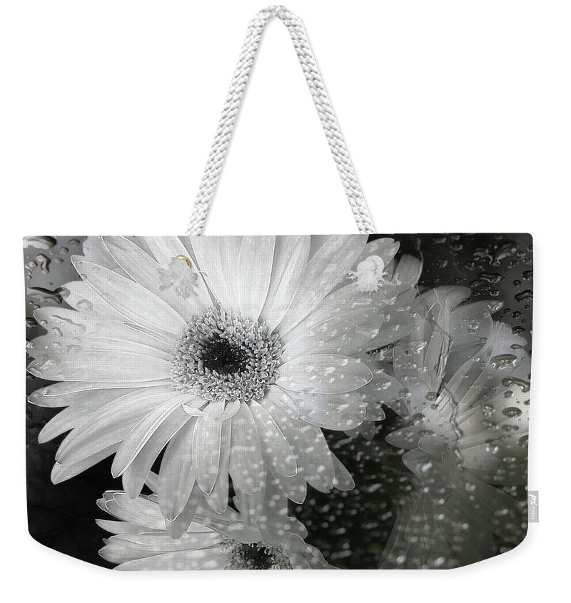 Nature Weekender Tote Bag featuring the photograph Rainy Day Daisies by Rory Sagner