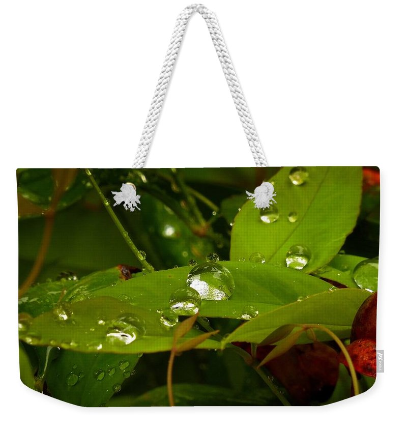 Weather Weekender Tote Bag featuring the photograph Rainy Nandina by Matt Taylor
