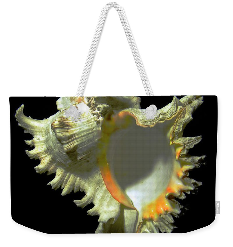 Frank Wilson Weekender Tote Bag featuring the photograph Rams Horn Seashell Murex Ramosus by Frank Wilson