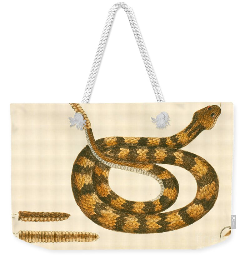 Viper Caudison Snake Weekender Tote Bag featuring the drawing Rattlesnake by Mark Catesby