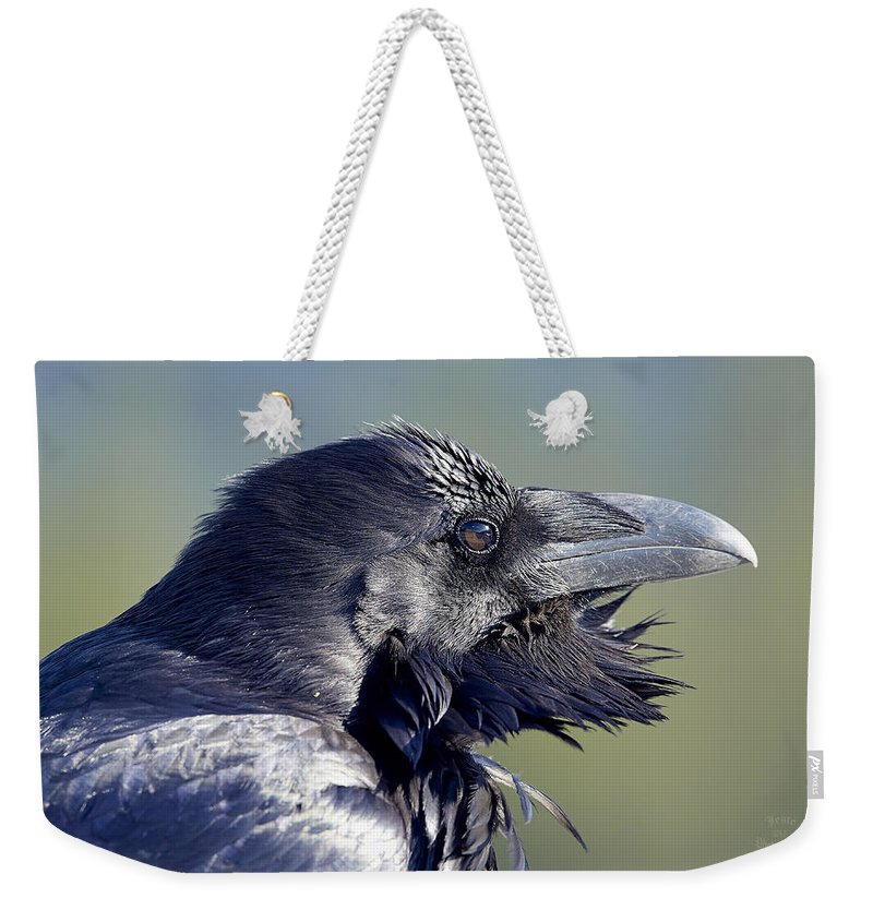 Raven Weekender Tote Bag featuring the photograph A Raven - Windblown by Jestephotography Ltd