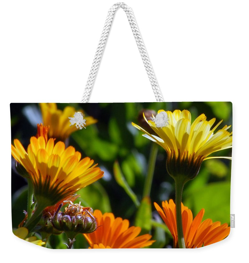 Flower Weekender Tote Bag featuring the photograph Reach For The Sun 1 by Amy Fose