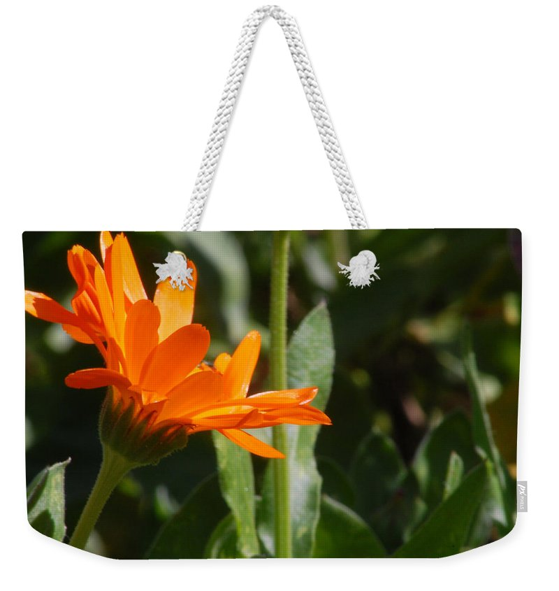 Orange Daisy Weekender Tote Bag featuring the photograph Reach For The Sun 2 by Amy Fose