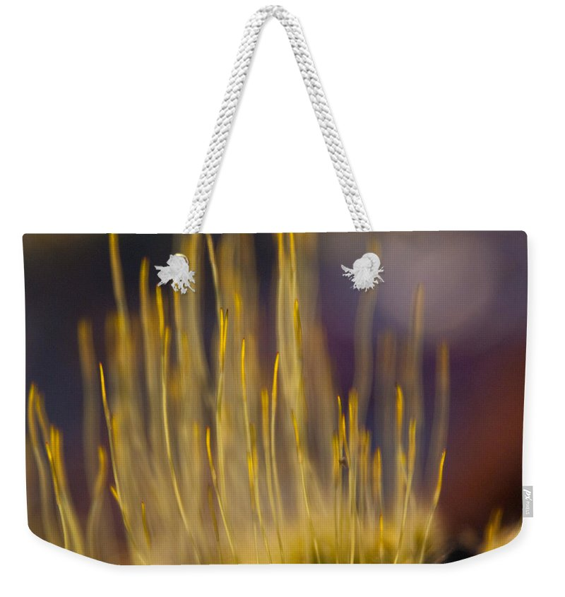 Reaching Weekender Tote Bag featuring the photograph Reaching by Douglas Barnett