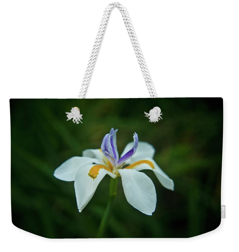 Reaching Weekender Tote Bag featuring the photograph Reaching Iris by Douglas Barnett