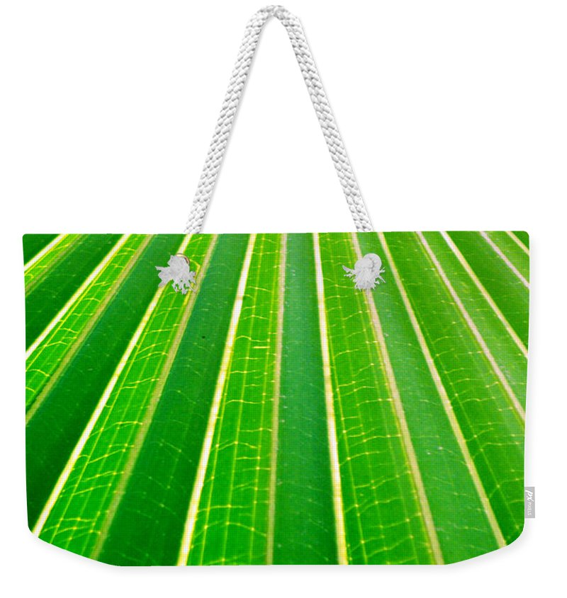 Nature Weekender Tote Bag featuring the photograph Reaching Out by Holly Kempe