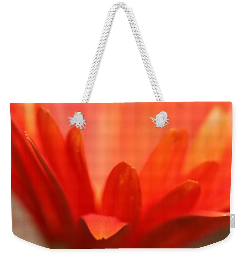 Daisy Plant Flower Orange Green Growing Photography Photograph Art Digital Weekender Tote Bag featuring the photograph Reaching Out by Shari Jardina