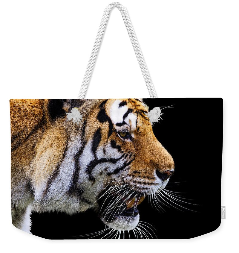 Bengal Tiger Weekender Tote Bag featuring the photograph Ready For Lunch by Janet Fikar