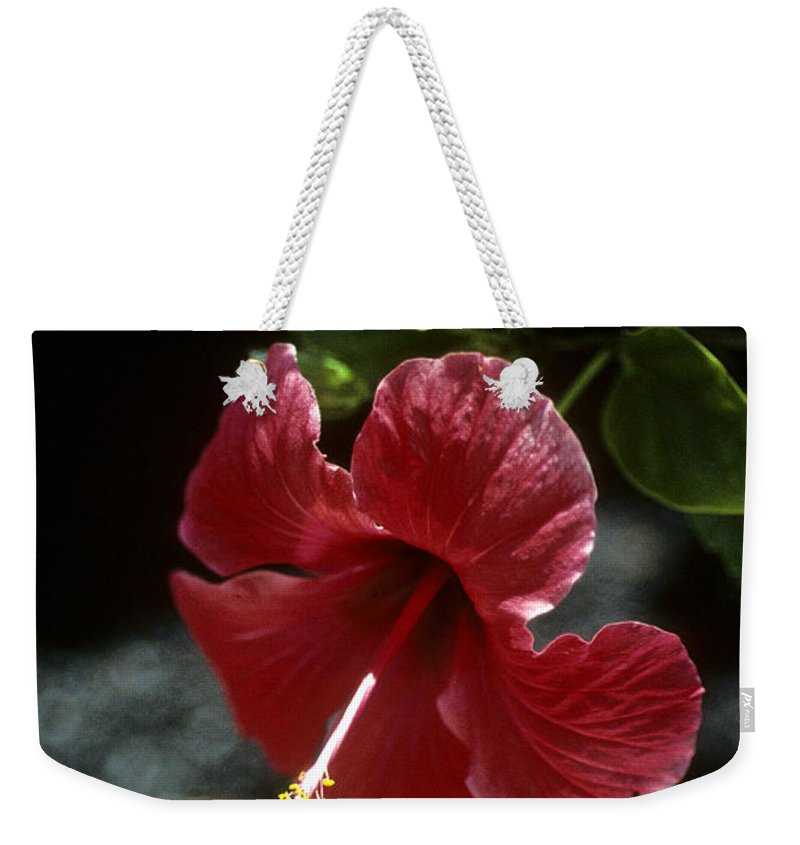 Orchid Weekender Tote Bag featuring the photograph Ready For Picking by Gary Wonning