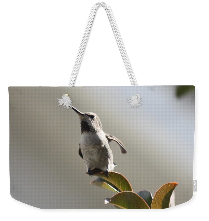 Hummingbird Weekender Tote Bag featuring the photograph Ready For Takeoff by Carol Groenen