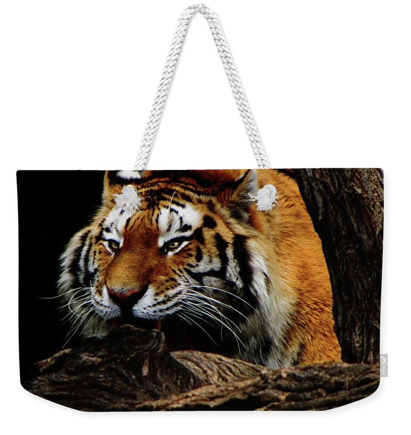 Tiger Weekender Tote Bag featuring the photograph Ready Or Not by September Stone