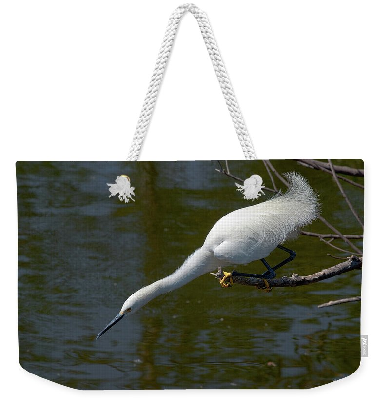Snowy Egret Weekender Tote Bag featuring the photograph Ready..set.. by Christopher Holmes
