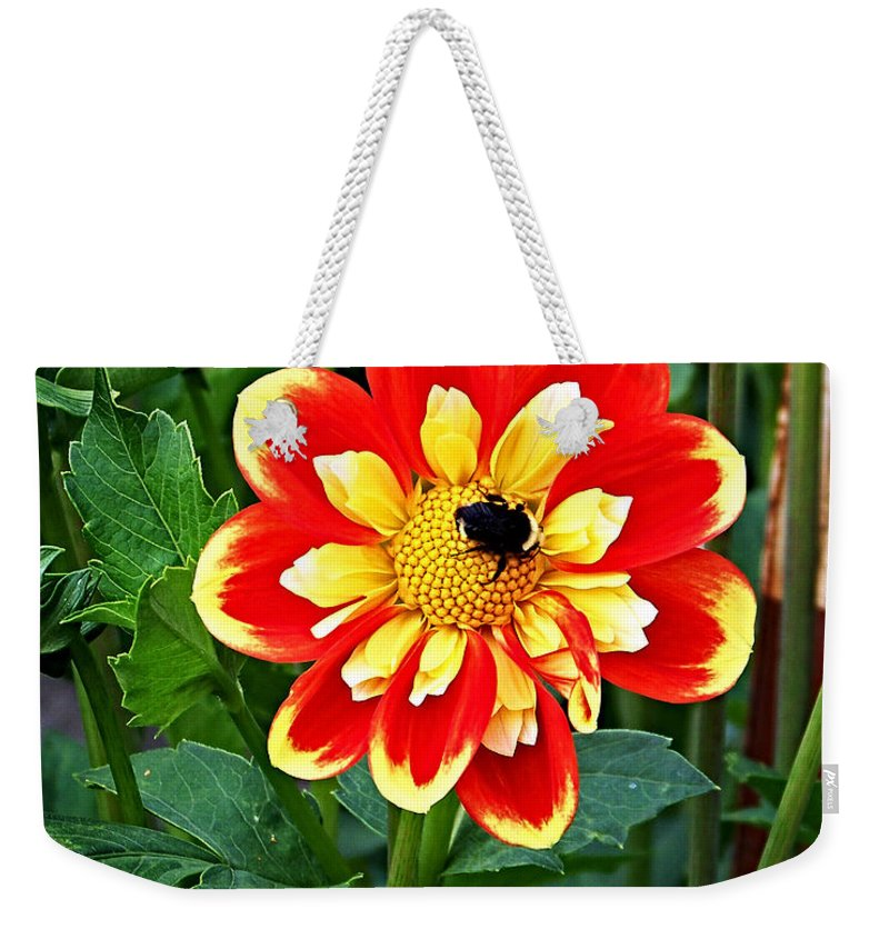 Flower Weekender Tote Bag featuring the photograph Red And Yellow Flower With Bee by Anthony Jones