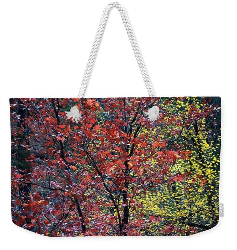 Landscape Weekender Tote Bag featuring the photograph Red And Yellow Leaves Abstract Vertical Number 1 by Heather Kirk
