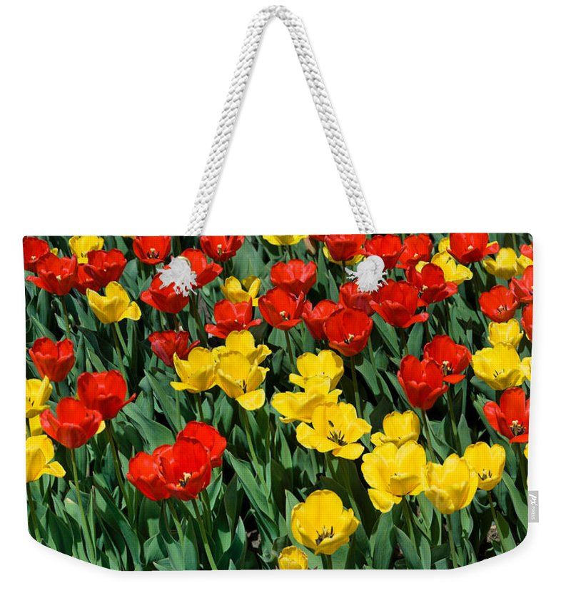 Red Weekender Tote Bag featuring the photograph Red And Yellow Tulips Naperville Illinois by Michael Bessler
