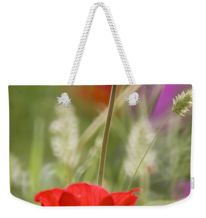 Red Weekender Tote Bag featuring the photograph Red Anemone Coronaria In Nature by Ofer Zilberstein