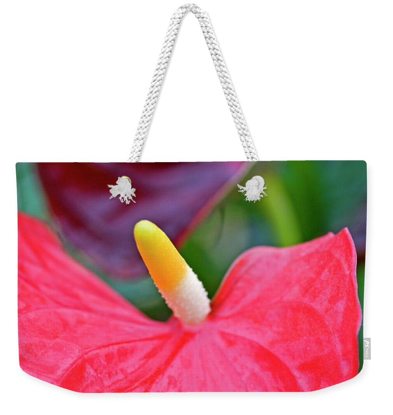 Psi Weekender Tote Bag featuring the photograph Red Anthurium Flower by Ofer Zilberstein