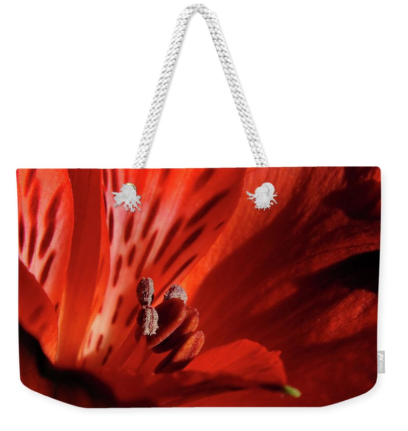 Red Weekender Tote Bag featuring the photograph Red Beauty by Bill Morgenstern