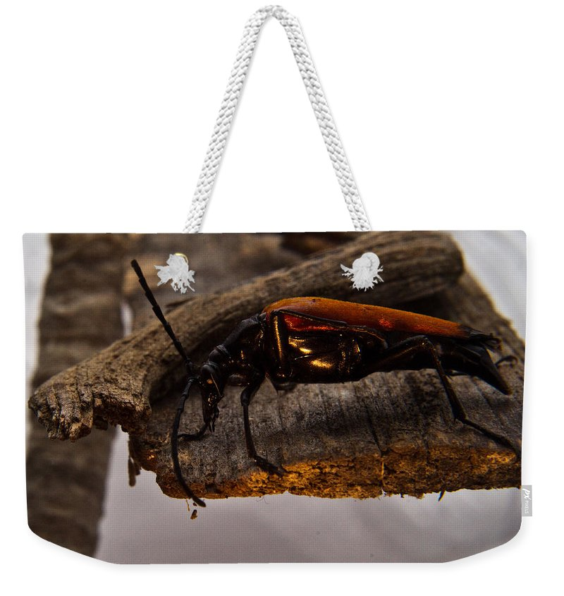 Beetle Weekender Tote Bag featuring the photograph Red Beetle At Twlight by Douglas Barnett