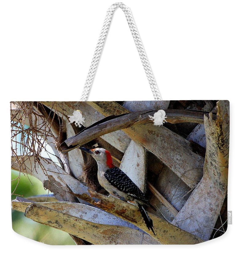 Red-bellied Woodpecker Weekender Tote Bag featuring the photograph Red-bellied Woodpecker Hides On A Cabbage Palm by Barbara Bowen