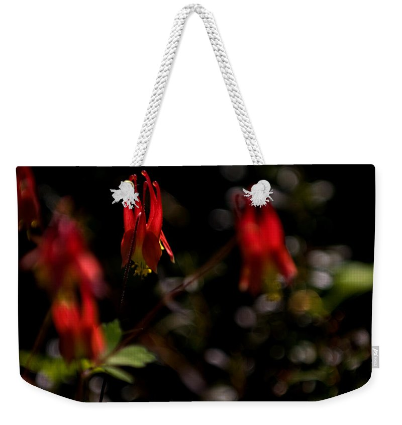 floral Beauty Weekender Tote Bag featuring the photograph Red Blaze by Paul Mangold
