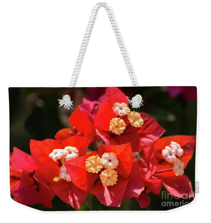 Bougainvillea Weekender Tote Bag featuring the photograph Red Bougainvillea by Zina Stromberg